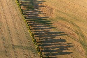 vue aérienne des champs de récolte en été photo