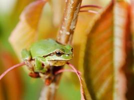 grenouille assise sur un arbre photo