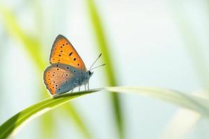 gros plan d'un papillon photo