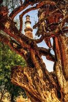 Qutub minar tower, delhi inde photo