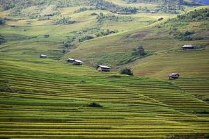ferme de riz au vietnam photo