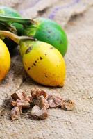 noix de bétel palmier à bétel frais, palmier d'arec (areca catechu linn.) photo