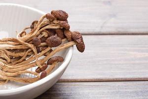 champignons de théier brun photo