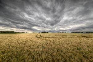 champ et orage photo
