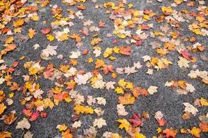 feuille d'érable au sol