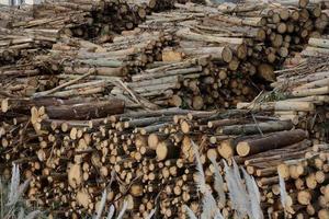 couper des troncs d'arbres photo