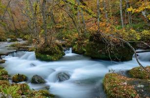 oirase gorge en automne, à aomori, japon
