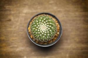 cactus sur table en bois.