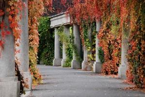 automne dans le parc