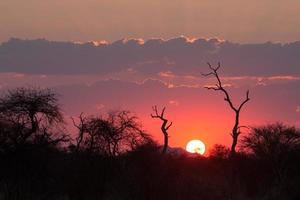 coucher de soleil rose à medikwe, afrique du sud