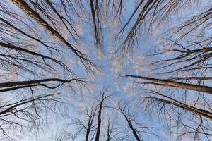 arbres levant