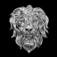 lion sur fond noir photo