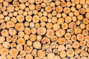 fond de souches d'arbre