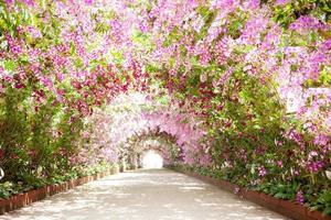 sentier dans un jardin botanique avec des orchidées bordant le chemin photo