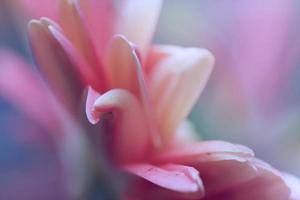 artistique macro composition flou chrysanthème fleur
