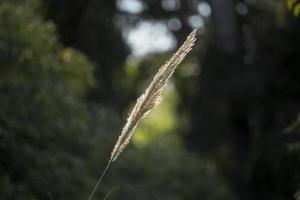 fleur de carex photo
