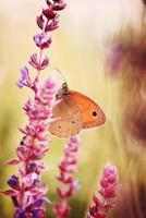 papillon sur la fleur photo