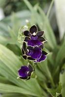 orchidée photo