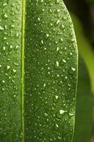 feuille sous la pluie
