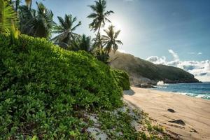 plage de sable tropicale à la journée ensoleillée d'été photo