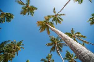 papier peint palmiers photo