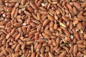 riz rouge biologique