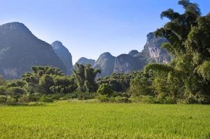 champ de riz et paysage de montagne près de yangshuo, guangxi, chine
