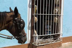 cheval à trinidad, cuba photo