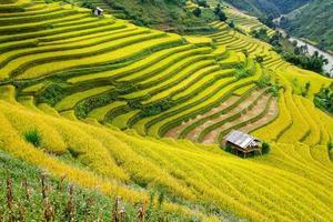 champs en terrasses dans la région montagneuse du nord du vietnam
