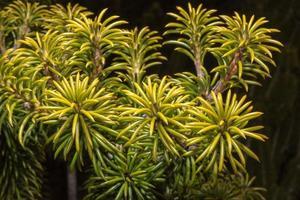 australie brousse fleurs flore détail photo