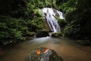 belle cascade dans la forêt photo