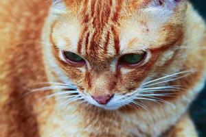 bouchent oeil de chat photo