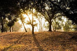 arbres dans le parc