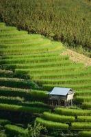 cabane sur terrasse de riz