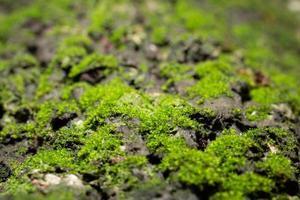 macro mousse à la surface d'un arbre dans la nature photo