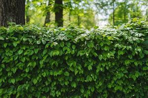 fond de plante verte photo
