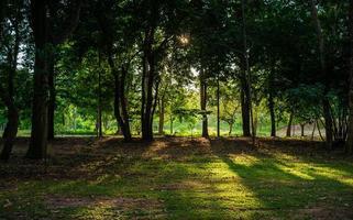 la lumière du soleil à travers les arbres photo