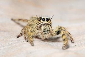 araignée macro jaune