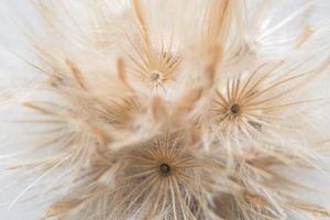 gros plan d'une fleur sauvage