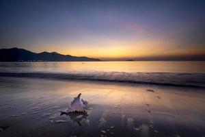 coquille de conque sur la plage au coucher du soleil photo