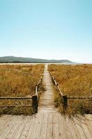 chemin en bois à travers le champ d'herbe brune