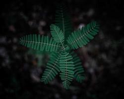 frondes de fougère sur fond sombre photo