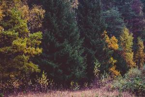 arbres colorés et champ sans ciel
