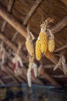 maïs jaune suspendu