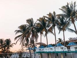 palmiers dans une station photo