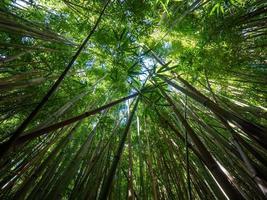 levant les yeux vers le bambou et le ciel