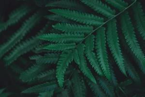 gros plan, de, fougère, feuilles