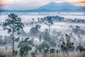 Lever de soleil brumeux dans le parc national de Thung Salaeng Luang