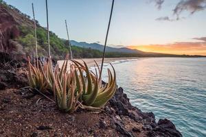 plantes vertes sur falaise photo