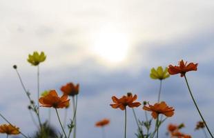 belles fleurs du point de vue de la fourmi. photo